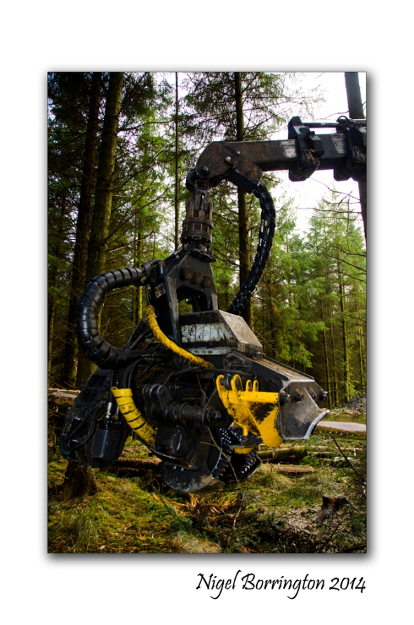 Irish forester work 5