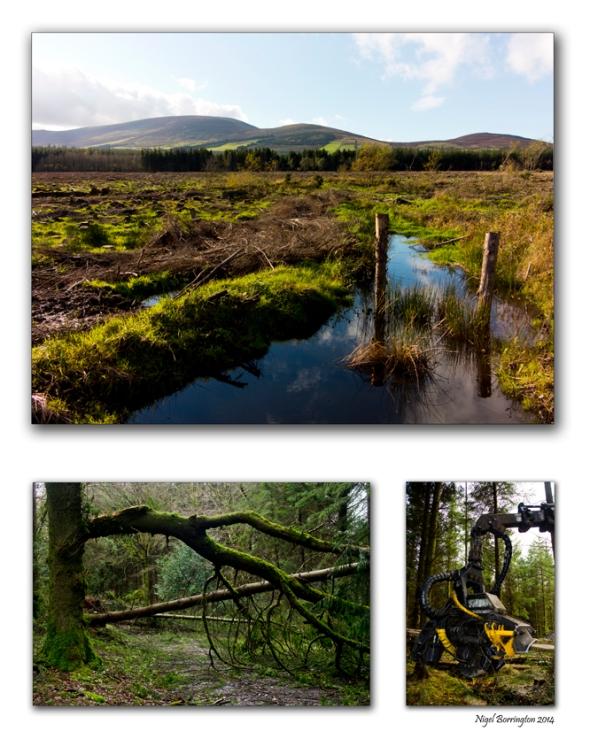 Breanomore forest, Slievenamon, county Tipperary. Landscape Photography : Nigel Borrington