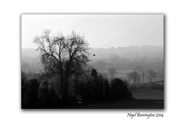 Misty fields Callan 2014