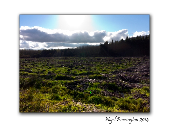 Remains of forest clearance 2