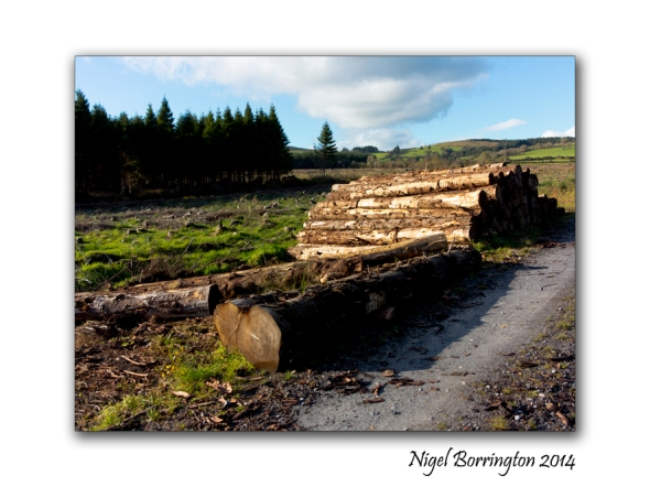 Remains of forest clearance 3