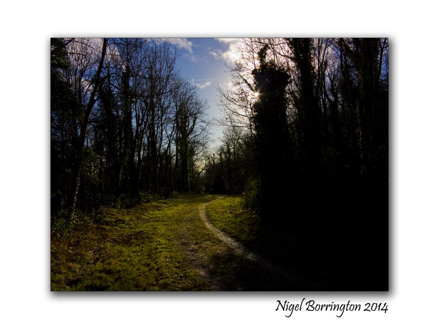 A Morning in Ballykeffe woods 2