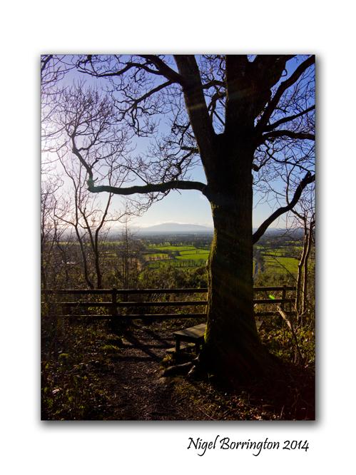 A Morning in Ballykeffe woods 4