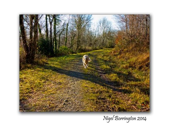 A Morning in Ballykeffe woods 5