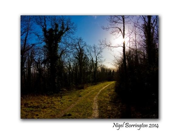 A Morning in Ballykeffe woods