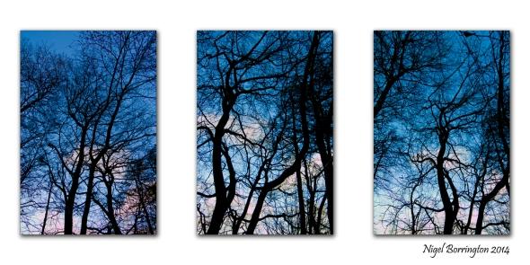 Eternal Forest Nigel Borrington