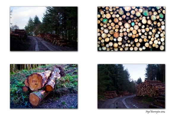 Kilkenny Landscape Photography On the Forest Road Nigel Borrington
