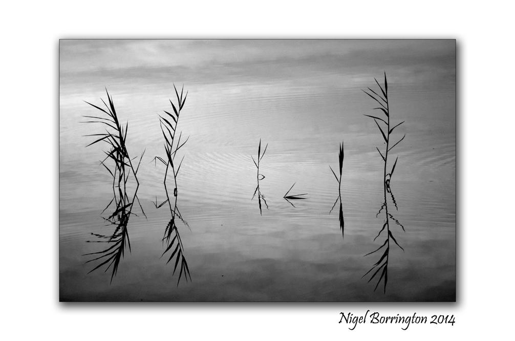 The Lake 03