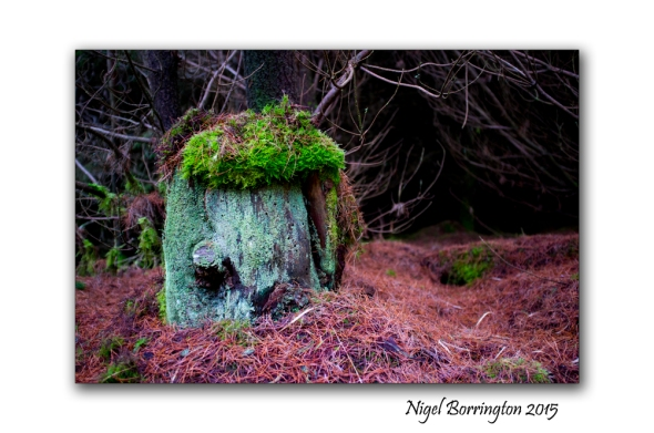 Irish Landscape Photography, Secrets of the forest Nigel Borrington