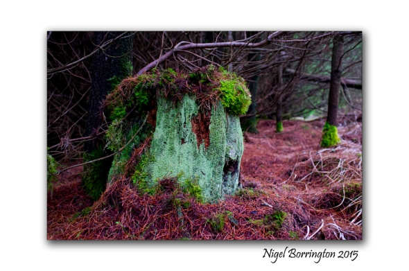 Irish Landscape Photography the forests 2