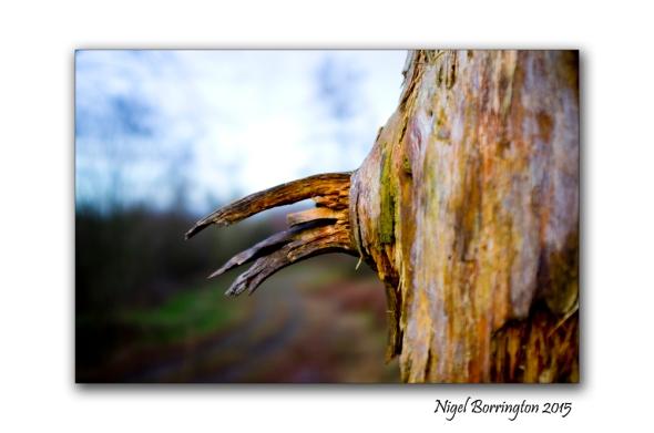 Irish Landscape Photography Winter in the Woodlands Nigel Borrington