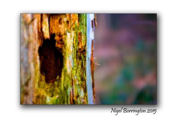 Kilkenny in Winter Woodlands 04