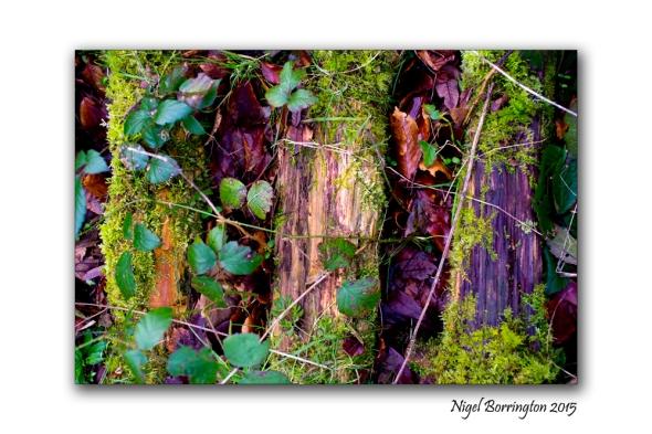 Kilkenny in Winter Woodlands 05