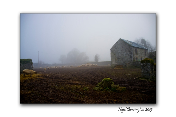 Kilkenny Landscape Photography sheep behind the gate on a farm on a winters day
