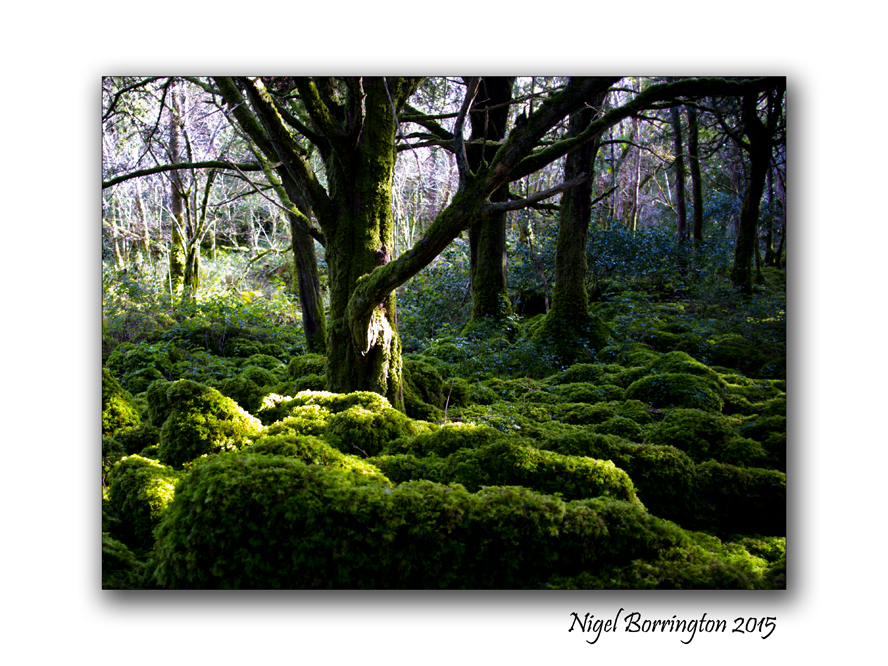 Killarney National Park 6