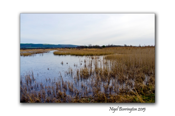 Littleton bog Tipperary 03