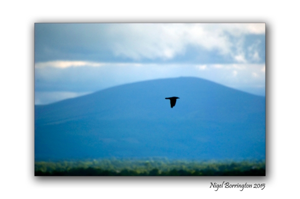 The crows will only grow louder. Irish Landscape and nature photography Nigel Borrington