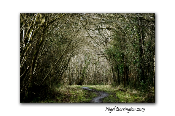The road not taken Robert frost. Landscape Photography : Nigel Borrington