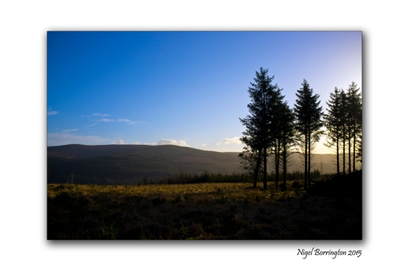 An Evening Walk in the hillside woodland, Clonmel, County Tipperary, Irish Landscape Photography : Nigel Borrington