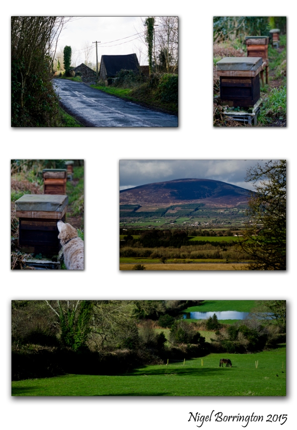 Bee Keeping with a view of SLievenamon, Co. Tipperary Irish Landscapes : Nigel Borrington