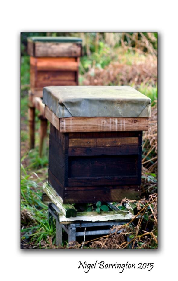 Bee Keeping