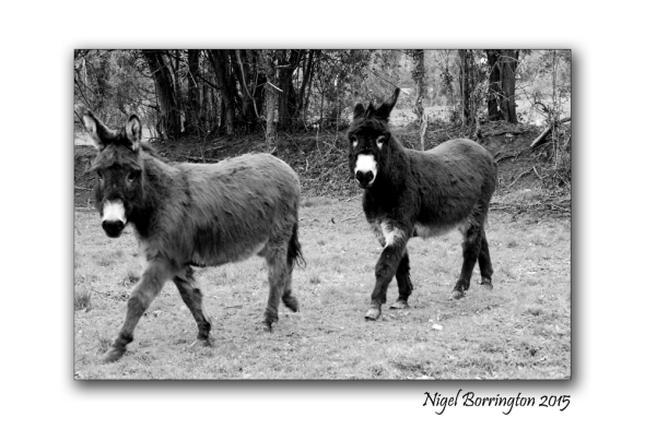 Monday Poems : Donkey in Brown Photography : Nigel Borrington