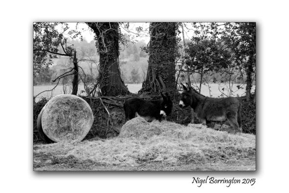 Monday Donkeys 2