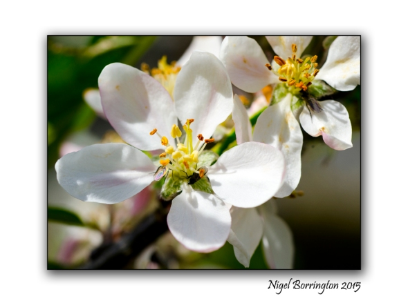 From Blossoms Nature Photography : Nigel Borrington