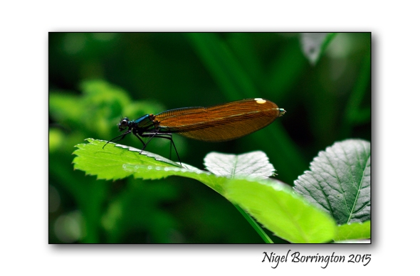 Flora & Fauna Irish Nature Photography : Nigel Borrington
