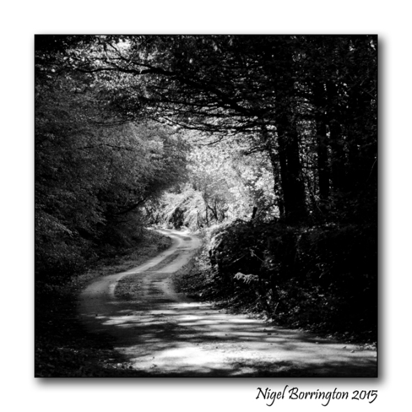 The Old Lane Through The Woods Black and white landscapes Nigel Borrington