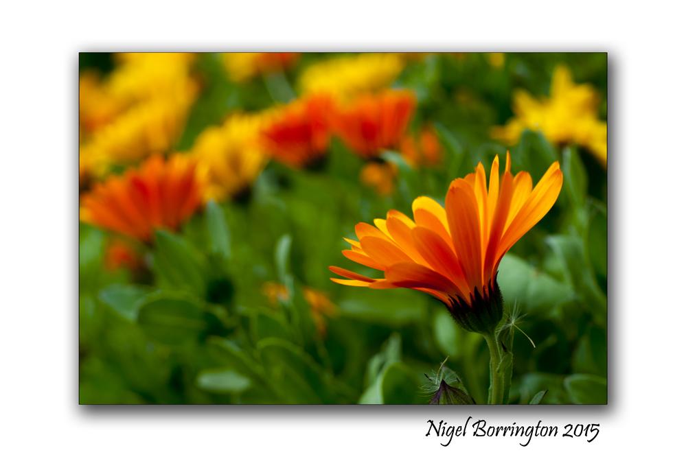 The flowers of May Nature Photography : Nigel Borrington