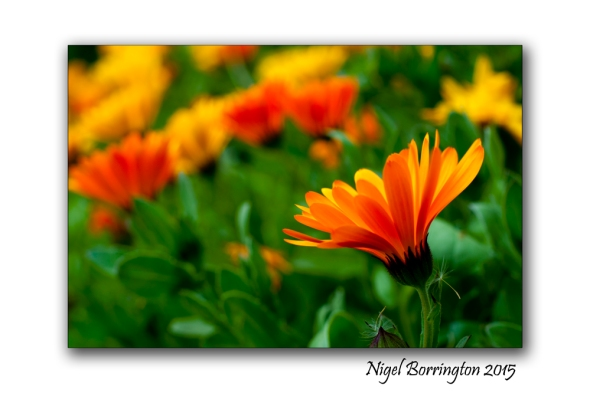 The flowers of May Nature Photography : Nigel Borrington