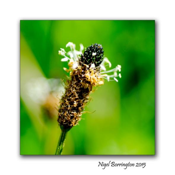 Seeds and life 2