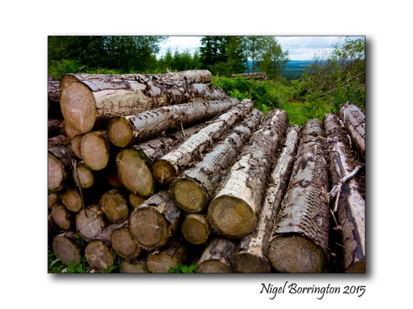 firewood 02