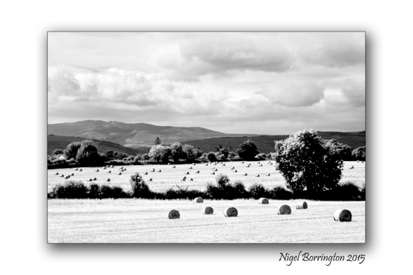 Kilkenny landscape images  August in black and white 1