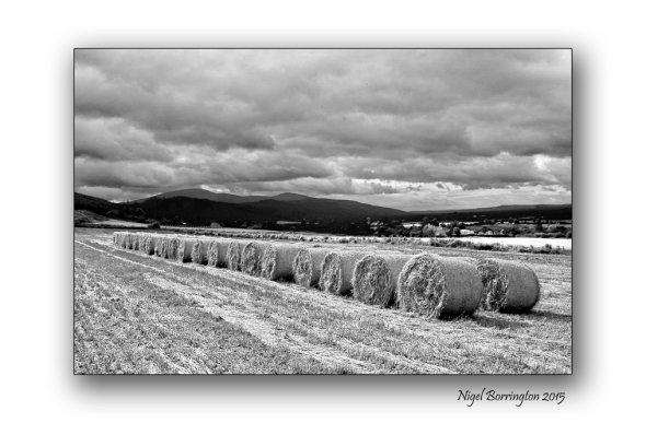 Kilkenny landscape images  August in black and white 3