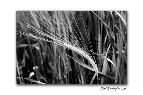 Kilkenny landscape images  August in black and white 6