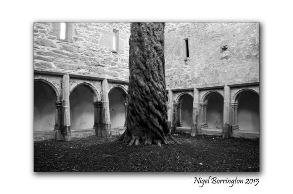 Muckross Abbey 05