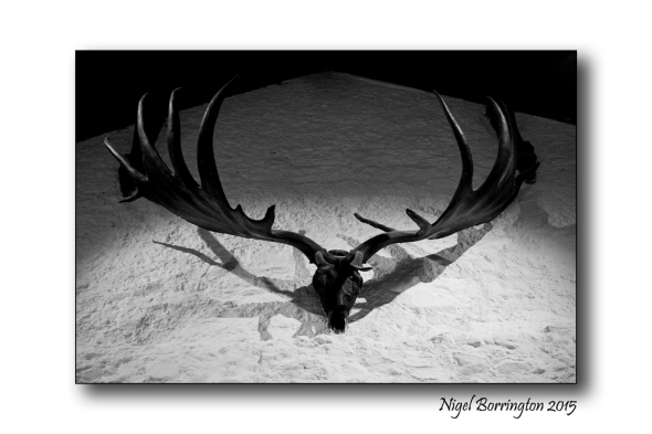 Irish Elk ,  At : Castle St., Cahir, Co. Tipperary