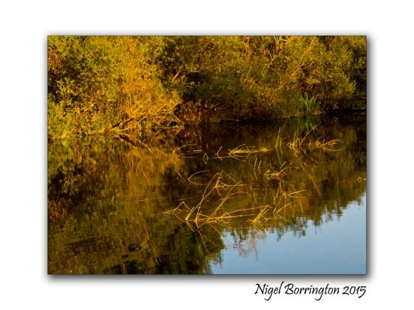 Autumn on river the Barrow Kilkenny Nigel Borrington