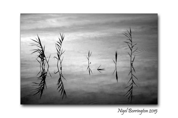 Reflection  Nigel Borrington