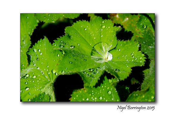 The Elements Water Nature Photography Nigel Borrington