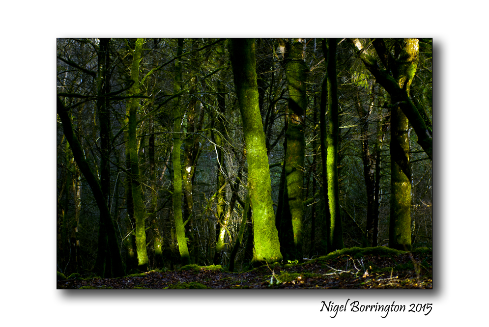 Monday Poetry Light Between The Trees By Henry Van