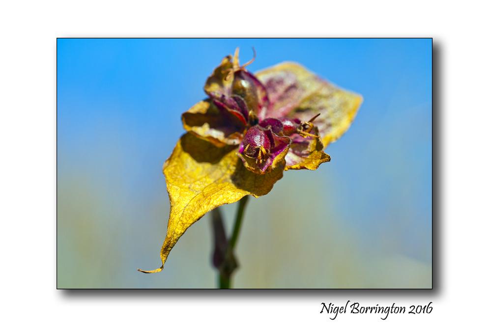 Winters Flowers Nigel Borrington 1
