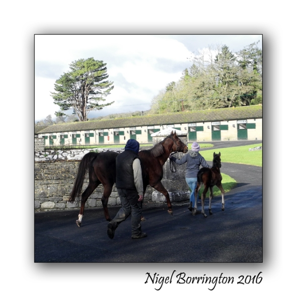 Mount Juliet Estate Stud Kilkenny Nigel Borrintgon
