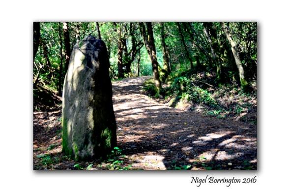 Ancient Ireland Standing stones Nigel Borrington