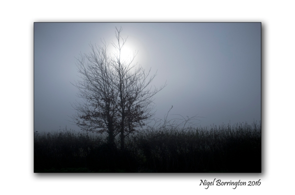 Foggy Morning Kilkenny Nigel borrington 02