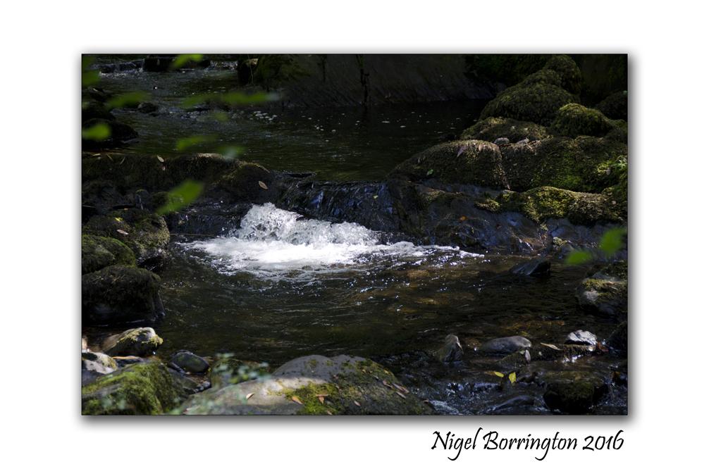 Spring on the river Nigel Borrington 01