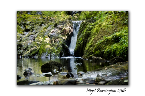 Springtime at the River Irish landscapes Nigel Borrington