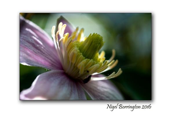Kilkenny wildlife photography springtime in the woods nigel borrington 02